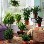 types-of-house-plants ozone